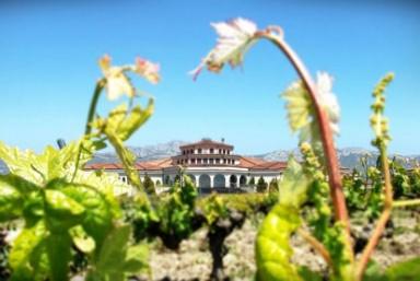 3. Experiencia en viñedo