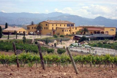 3. Visita + Ruta por Viñedo + Cata